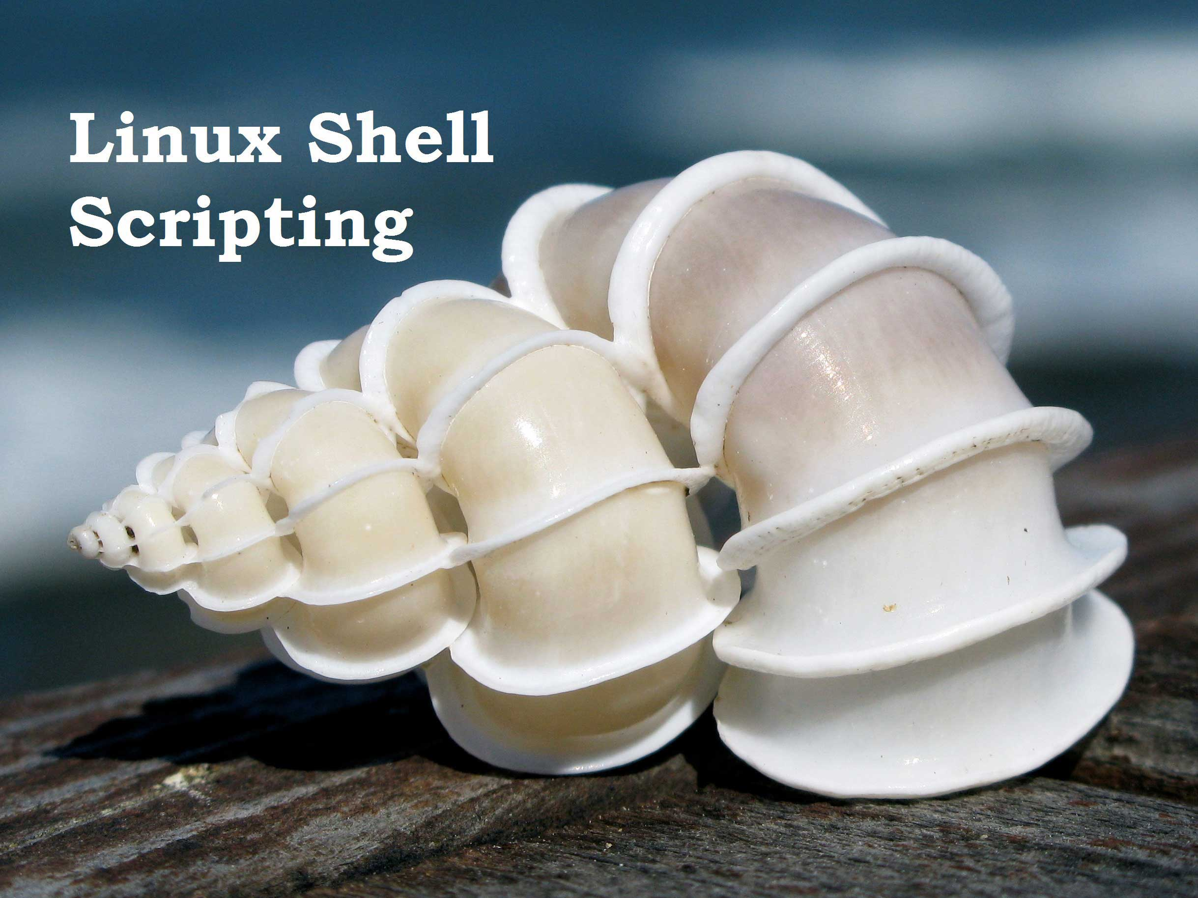 4 Important Shell Script Types For Linux Newbies (Helpful)