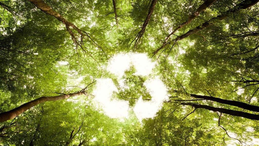 forest recycle