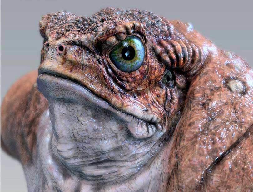 sculpt frog - mudbox software