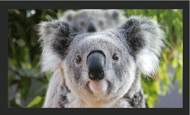 Blurred Image (Baby Koala)