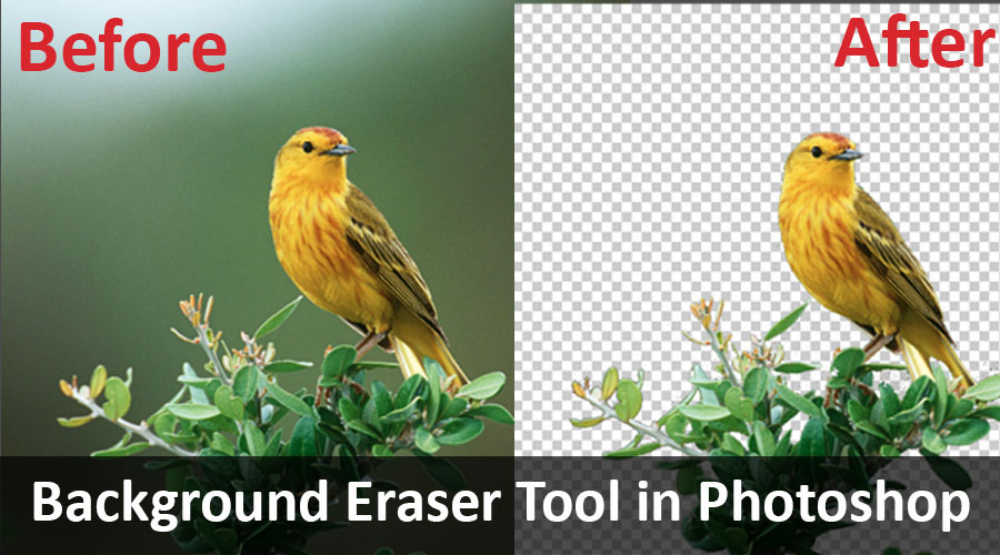 background eraser tool in photoshaop