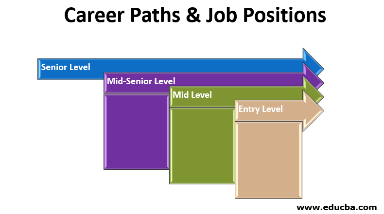 Career Paths & Job Positions