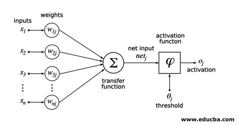 The Architecture of Neural Networks