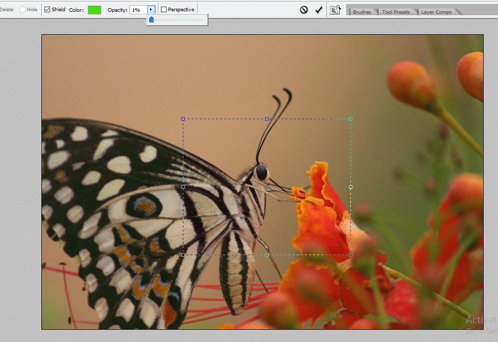 opacity 1% (Crop Tool in Photoshop)