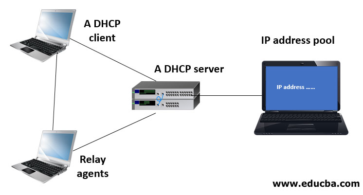 Components of DHCP