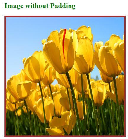 HTML Image Padding OP 1