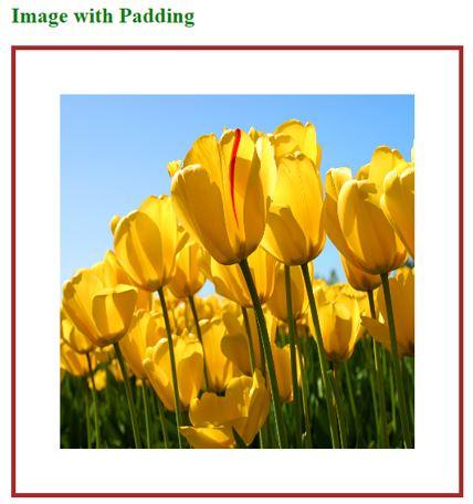 HTML Image Padding OP 2