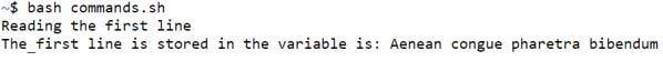 Bash File4